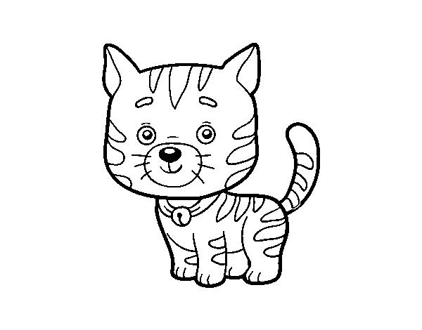 Desenho De Um Gato Doméstico Para Colorir