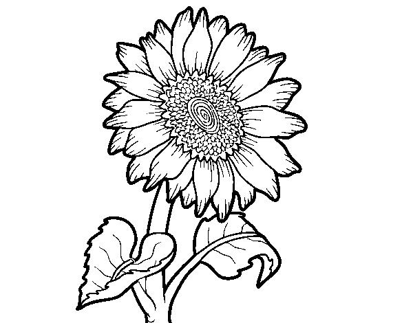 Desenho De Um Girassol Para Colorir
