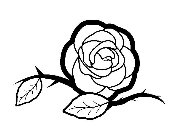 desenho de uma linda rosa para colorir colorir com